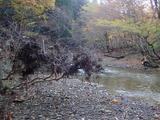 増水によりサワフタギに引っかかったゴミ