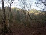 早朝の森 マガリ谷出合