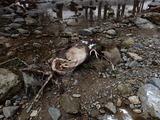 4尖の牡シカの死体