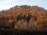 野田畑の北西側 山の斜面