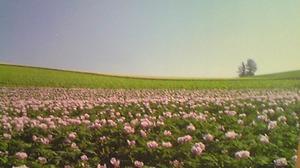 2515一面の花畑