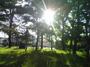 2356「森の向こうにかつての我が家」