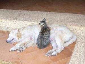 2487犬と猫