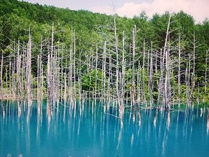 人気の青い池