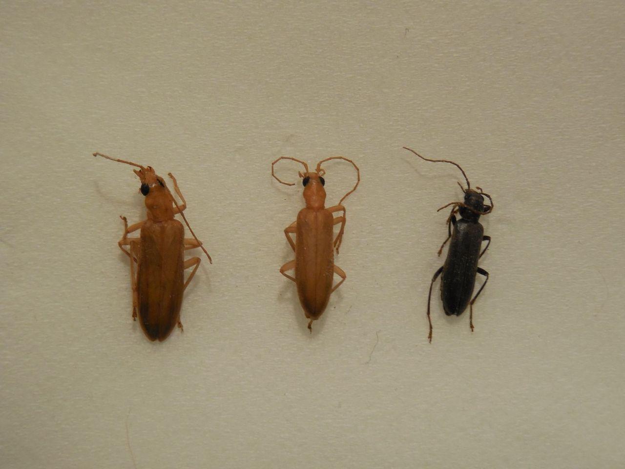自称「文化昆虫学研究家」のひとりごと