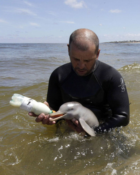 endless_cuteness_a_man_nursing_a_little_dolphin_640_high_01