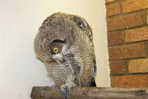 an_owl_that_brings_gifts_640_11