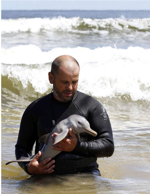 endless_cuteness_a_man_nursing_a_little_dolphin_640_high_03