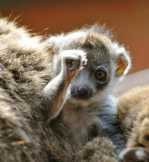 cute_baby_animals_640_13