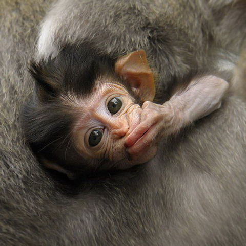 cute_baby_animals_640_04