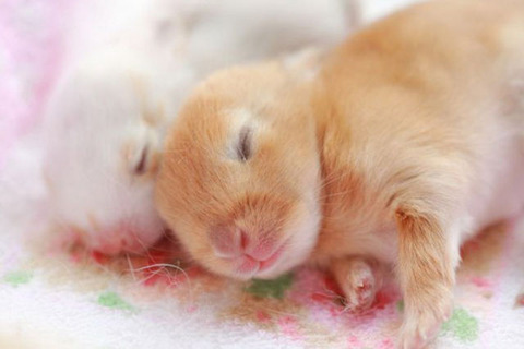 cute_baby_animals_640_16