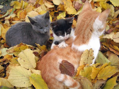 adorable_felines_having_a_blast_in_the_fall_leaves_640_02