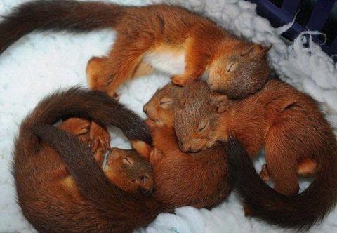 cute_baby_animals_640_08