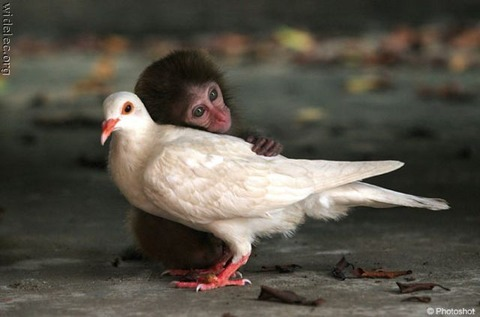 funny_animal_couples_640_01