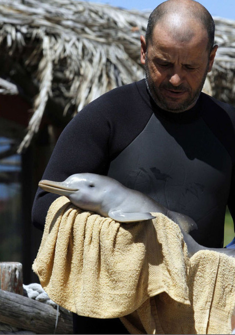 endless_cuteness_a_man_nursing_a_little_dolphin_640_high_05