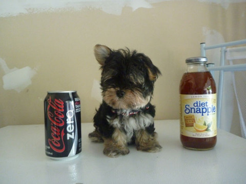 soda_can_sized_puppies_640_01