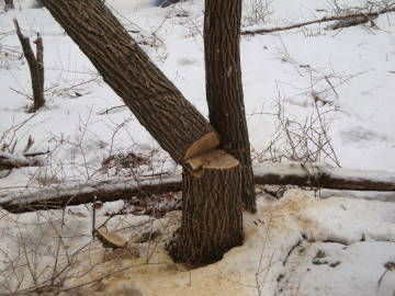常盤の木3