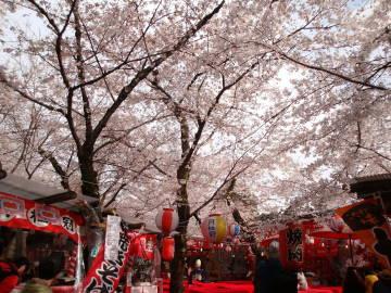 平野神社の境内の様子