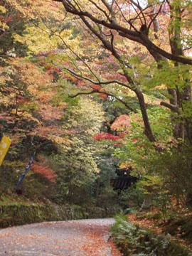 赤山禅院の紅葉