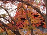 南禅寺紅葉