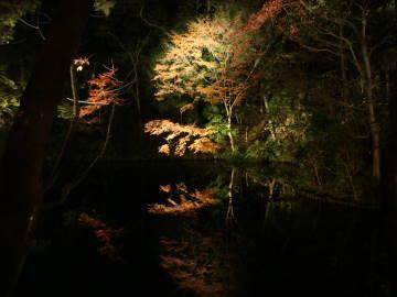 知恩院方丈庭園の紅葉