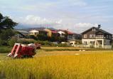 稲刈り2008