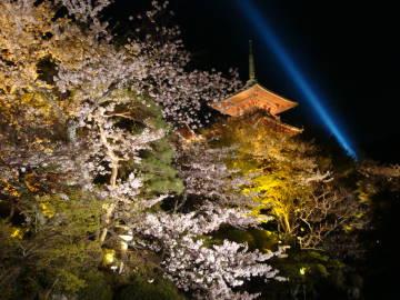 ライトアップの清水寺の塔と桜