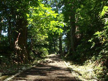 羽黒山杉並木