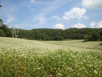 中山高原 そばの花
