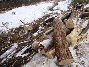 川原の間伐材2