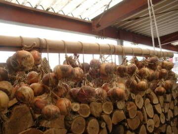 玉ねぎの収穫6