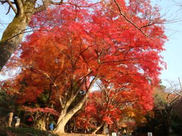 鷺森神社参道の紅葉