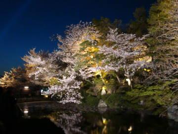 清水寺の池と桜のライトアップ