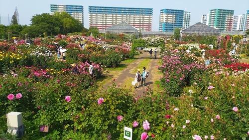 202159京成バラ園_210509_40