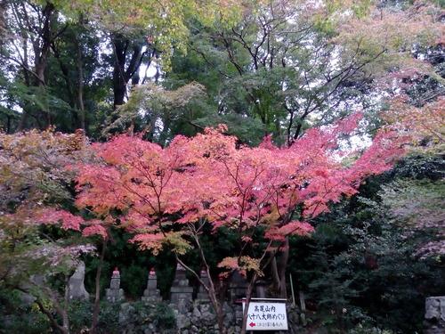 18-11-11-09-19-26-354_photo