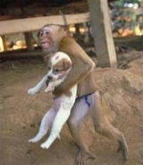 Flood 2011 - Monkey rescuring puppy