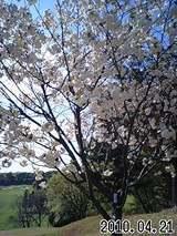 緑ヶ丘 花