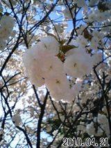 緑ヶ丘 花のアップ