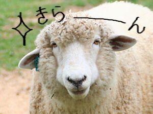 羊オブザイヤー