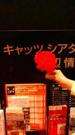キャッツ 花