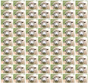 羊が3000匹