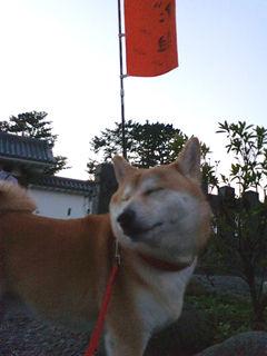 みかんin小田原城