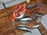 魚釣り全部の魚