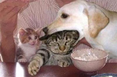 犬に噛まれる猫1