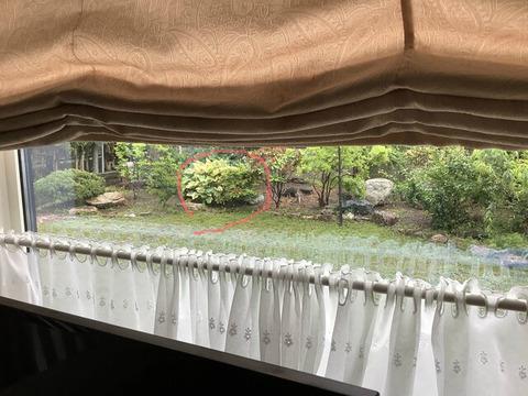 家から見える庭