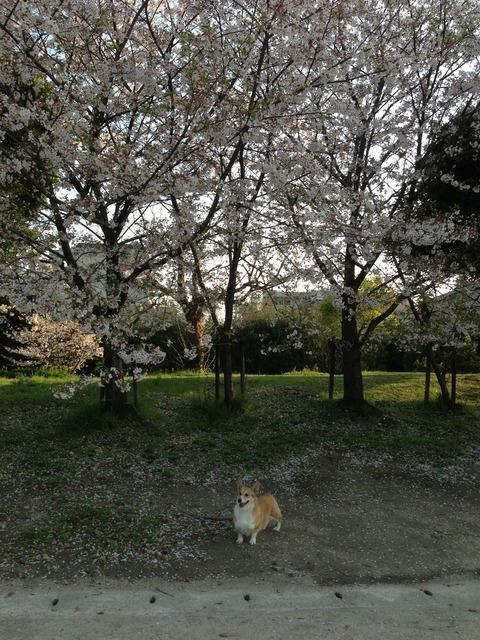 2014_04_02_17_14_57