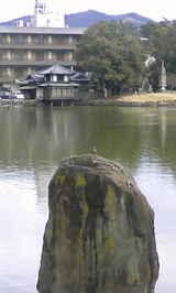 猿沢池の畔