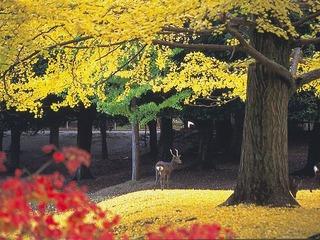 奈良公園 錦秋