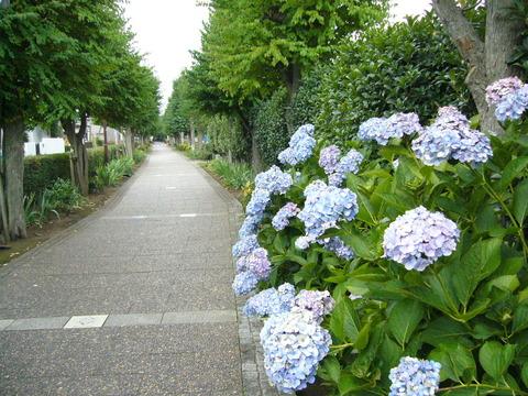 201407shimizusamukawa127