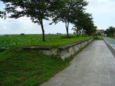 201108tsukuba028虫掛